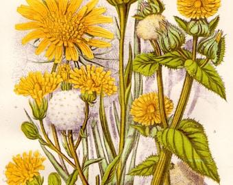 1899 FLOWERING PLANTS Original Antique Print Anne Pratt Botanical Chromolithograph