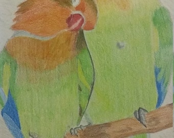 Copy of Lovebirds Coloured Pencil Drawing
