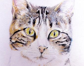 Cat Pet portrait, kitten drawing, original cat picture, custom pet portrait, commission picture, paint my pet, draw my pet, animal portrait