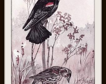 Red-Winged Blackbird Bird Book Print (1932): Frameable Wall Art, Nature Painting, Black Pink Red Grey Brown, Marsh Stream, Shabby Chic, Zen