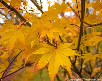 Digital Download Autumn Leaves Instant Download Digital Wall Art Floral Photography Macro Photography Fine Art Photography Nature Prints