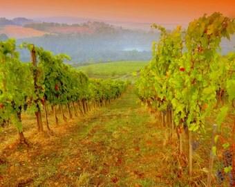 Photography Italy vineyard, Wall Art Italy, Wine Tuscany- Vineyard Vibrance, Italy,home decor,