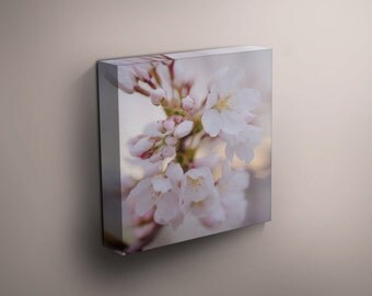 Wall Canvas, Cherry Blossoms (Square)