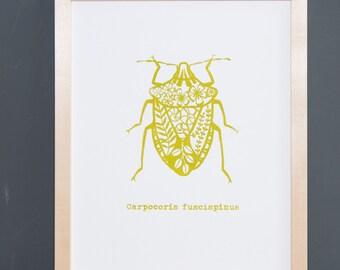 Bug - serigraphy screenprint linocut print beetle