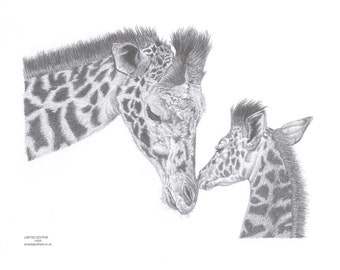 GIRAFFE mother & Calf Limited Edition art drawing print signed by UK artist