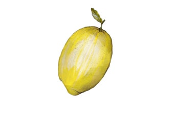 Lemon illustration (print)