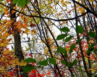 Color of Fall / Autumn colors