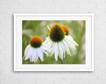 White Flower Deco Art Photo Framed