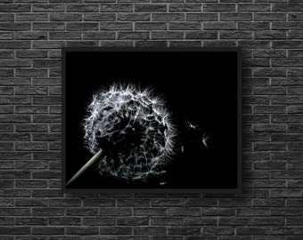 Dandelion Photo - Minimalist Photo - Botanical Photo - Black and White - Minimalist Wall Art - Modern Wall Decor - Living Room Decor