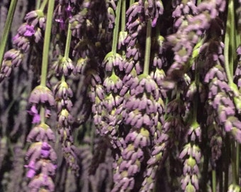 Dried Lavender - Grosso
