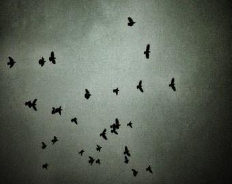 """Black Birds - Archival Photograph - 6x6"""", 8x8"""", 10x10"""" - Watercolour Paper"""