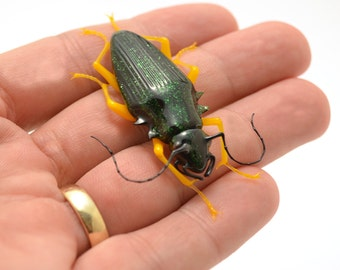 Green Sparkler Beetle - realistic lampwork glass insect beetle figurine sculpture glass artist Wesley Fleming