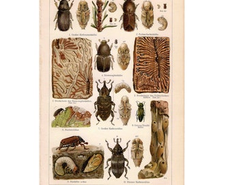 1894 ANTIQUE INSECT LITHOGRAPH - forest insects original antique bug print no 2