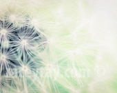 Mint Dandelion Print, White, Mint Green, Flower Photography, Baby Neutral, Nursery Decor, Pastel, Dandelion Art