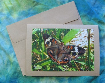 Beautiful BUCKEYE BUTTERFLY Note Card -  Lovely Insects, Insect, Butterflies, 5 by 7 Nature Photo Photograph Cards