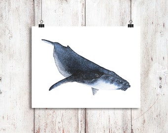 Baby Humpback Whale Watercolor Printable Art, Whale art, Printable Art, Digital Download Print, Humpback print, Whale painting, Beach