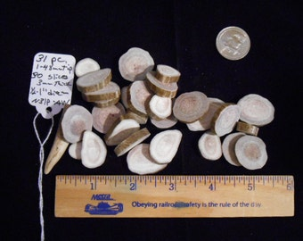 31 Pieces Including 30 Smoothed Consecutive Cut Mule Deer Antler Slices and 1 Antler Tip for Jewelry, Crafts or Rune Blanks-N31pAW