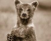 CUTE BABY BEAR Photo, Sep...