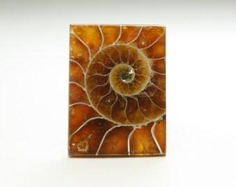 Stunning Rectangle Ammonite Fossil Designer Cabochon