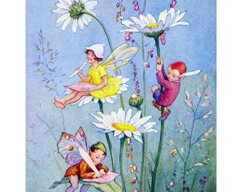 Fairy Print - Daisy Flower Faeries - Repro Margaret Tarrant