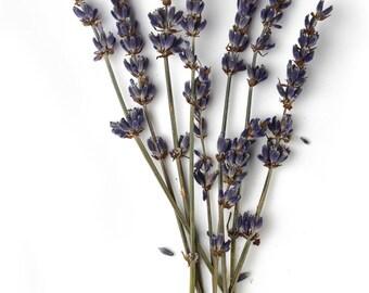 Set of 10 bundles of 4 English Lavender Sprigs