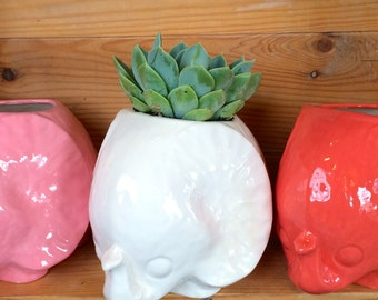 Elephant Planter Perfect for Succulents or Flowers--Choose your color!