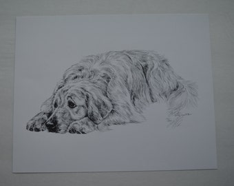 NEW LOW PRICE! Lyn St Clair Golden Retriever in Pen and Ink signed and numbered.