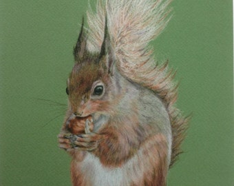 Signed Limited edition mounted giclee art print of pencil crayon drawing of a red squirrel