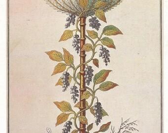 Black Pepper Poivre Noir Plant Herbal Botany Flower Print 1980 Botany colour print Wall Art Home Decor Vintage Print Modern Print