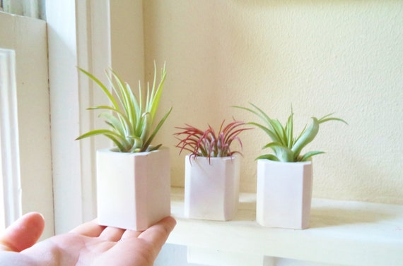 Geometric mini planter air plant holder tiny square planter for Geometric air plant holder