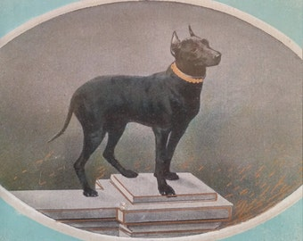 Antique Manchester Terrier Dog Postcard  German