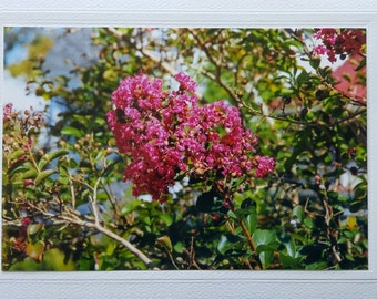 Pink crape myrtle, blank greeting card, flowering tree, photo notecard, for any occasion, birthday card, Mothers Day card, tree branches
