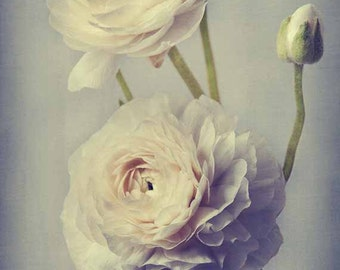 Cottage Chic, Ranunculus Print, Flower Photography, Gift for Her, Bedroom Decor, Bathroom Decor, Beige, Gray, Still Life Photography