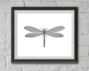 Instant Download of Dragonfly Vintage Illustration, Printable - Pure White style, 8x10, Wall Decor, Wall Art Print, Originally drawn in 1896