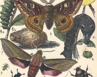 1872 Antique Insects Print Moth Butterfly Beetle Entomology