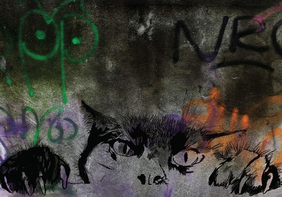 black cat graffiti berlin wall paint eyes watching animal city. Black Bedroom Furniture Sets. Home Design Ideas