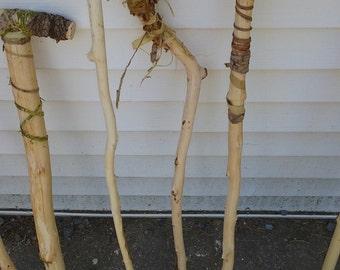 Philmont Walking Stick