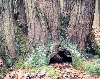 Woodland Wall Art, Fairy Home, Forest Photography, Woodland Art Print, Forest Art, Nature Photography, Tree, Moss, Lichen, Wall Decor