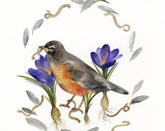 American Robin Painting-  watercolor print, bird watercolor