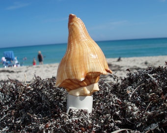 Vole Conch Shell Night Light