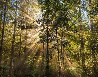 Fine Art Photo - Morning Sun
