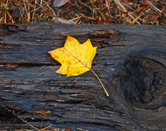 Yellow Leaf on a Log,Leaf Photography,Nature Photography, Fall Photography,Autumn Photography,Woodland,Forest,Fall wall art,fall decor