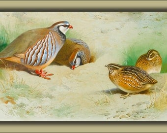 24x36 Poster . French Partridge And Chicks By Archibald Thorburn 1915