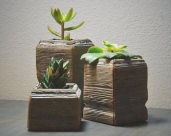 Reclaimed Succulent Planter - PLANT INCLUDED - // Succulents //  Multiple Sizes