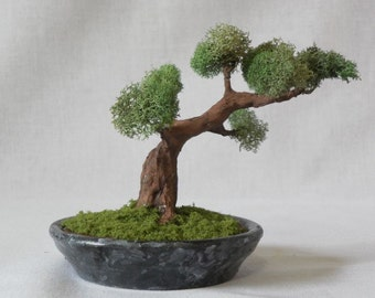 MB17 Miniature Bonsai tree in simulated stone planter