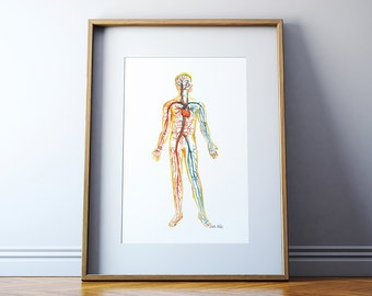 Circulatory System Watercolor Print - Body Systems Watercolor Print - Anatomy Art - Medical Art