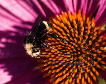 Bee, FLOWER photography, wall art, home decor, fine art, 8 x 10, wedding gift, MACRO photography, honey bee photo, nature photograph, nature