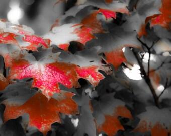 Crimson Leaves Print