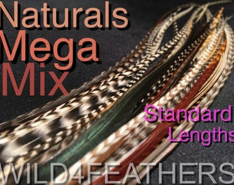 Natural Feather Hair Extensions Real Feathers Mega Mix 32 + 4 FREE  Standard Lengths Wholesale Bulk Pack Tools Beads Kit Options Auslr