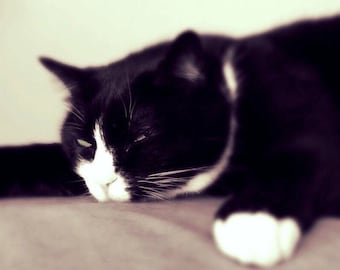 Cat photograph greeting card